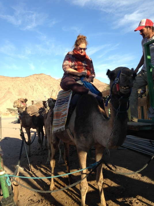 Mounting Naomi the Camel