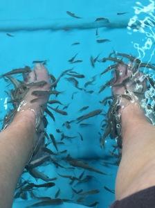 Fish Feet