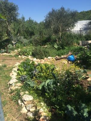 Organic gardens
