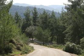 Aminadav Forest outside Jerusalem